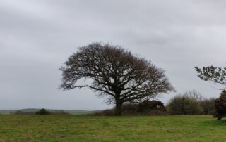 tree on downs